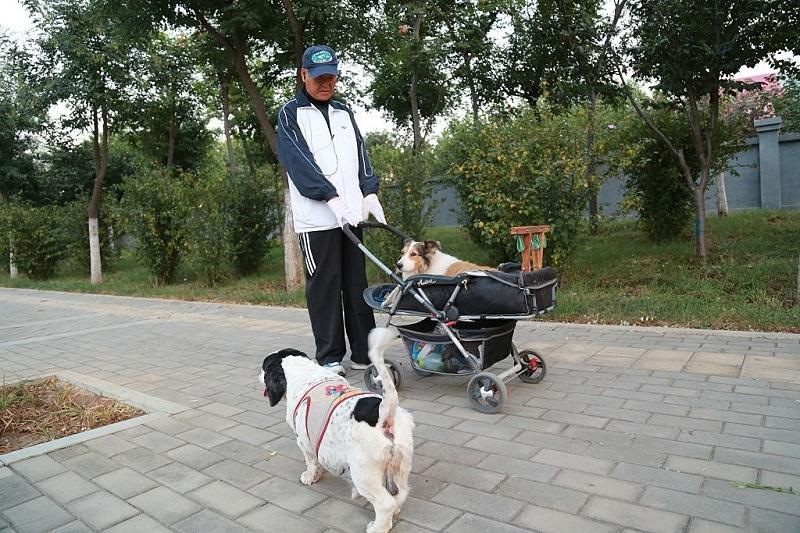 dangdaizhongguo-zhongguojingji-chongwujingji-renkoulaohua1_x1